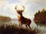 Eight Point Stag - Arthur Fitzwilliam Tait Oil Painting