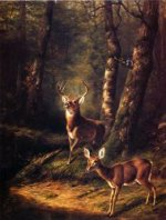 The Forest: Adirondacks - Arthur Fitzwilliam Tait Oil Painting