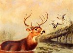 Buck in a Marsh -Arthur Fitzwilliam Tait Oil Painting