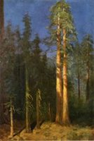 California Redwoods - Albert Bierstadt Oil Painting