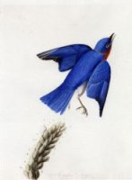 Eastern Bluebird - John James Audubon Oil Painting