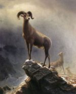Rocky Mountain Sheep - Albert Bierstadt Oil Painting