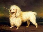 A Lovely Poodle - Oil Painting Reproduction On Canvas
