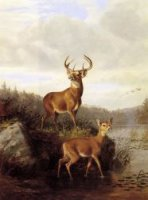 Buck and Doe - Arthur Fitzwilliam Tait Oil Painting