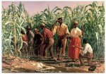 A Southern Cornfield, Nashville, Tennessee - Oil Painting Reproduction On Canvas Thomas Waterman Wood Oil Painting