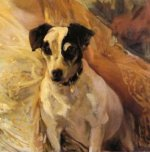 Portrait of a Jack Russell - Joaquin Sorolla y Bastida Oil Painting