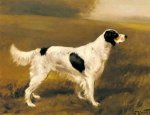 English Springer Spaniel - Oil Painting Reproduction On Canvas