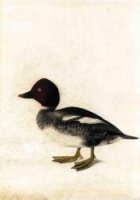 Redhead Duck - John James Audubon Oil Painting