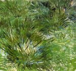 Clumps of Grass - Vincent Van Gogh Oil Painting