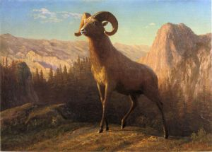 A Rocky Mountain Sheep, Ovis, Montana - Albert Bierstadt Oil Painting