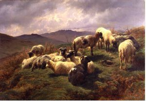 Sheep in the Highlands - Rosa Bonheur Oil Painting