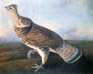 Ruffed Grouse - John James Audubon Oil Painting