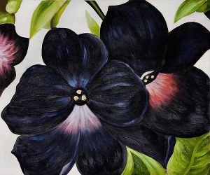 Black and Purple Petunias - Georgia O'Keeffe Oil Painting