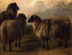 Three Wooly Sheep - Rosa Bonheur Oil Painting