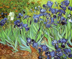 Irises V -  Vincent Van Gogh Oil Painting
